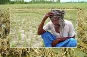 जोरदार बारिश से खरीफ की फसल तबाह, अब किसानों को सताने लगी रबी की फसल की चिंता