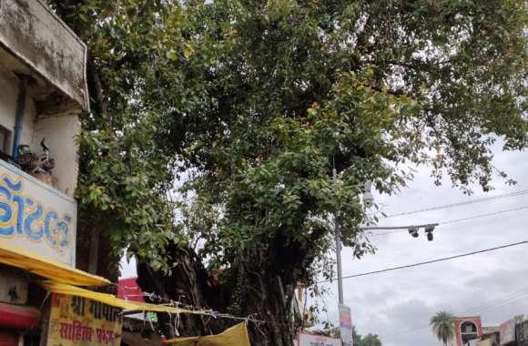 आज भी देश भक्तों की यादें संजोए है यह वट वृक्ष