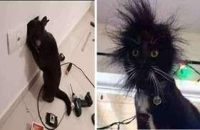 स्विचबोर्ड में सर घुसाना इस बिल्ली को पड़ा महंगा, हुई ऐसी हालत