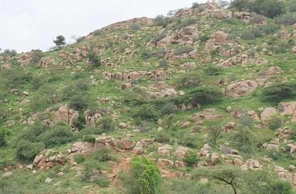 पत्थरों के लिए यहां वन क्षेत्र की पहाड़ी पर कर रहे धमाके