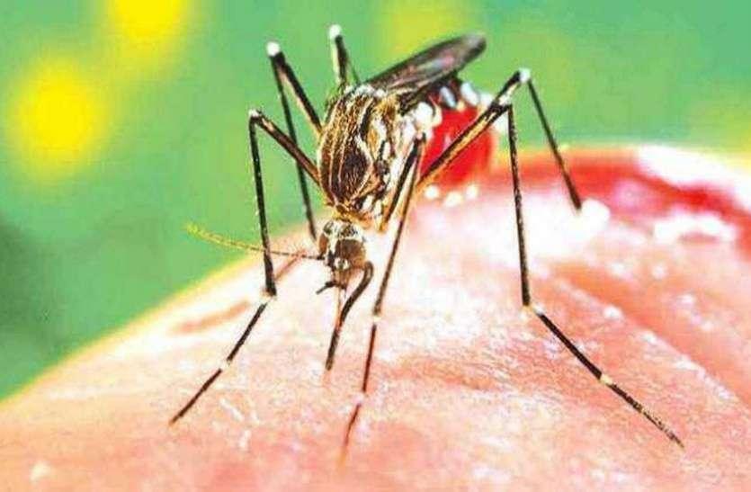 मध्य अमरीका में डेंगू का प्रकोप, इस साल 127,000 मामले दर्ज, 124 की मौत