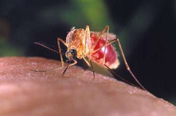 Health Tips : ये करते ही डेंगू, मलेरिया, चिकनगुनिया  के मच्छर भाग जाएंगे
