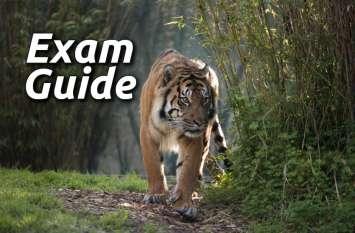 Exam Guide: इस टेस्ट से चेक करें अपने Govt Jobs के एग्जाम्स की तैयारी