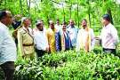 जशपुर के बाद अब छत्तीसगढ़ के इन हिस्सों में भी होगी चाय की खेती, खाद्य मंत्री ने की घोषणा
