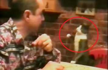 बिल्ली अपने बहरे मालिक से ऐसे करती है बातें, देखकर दंग रह जाएंगे आप
