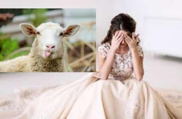 71 भेड़ों के बदले पत्नी को सौंप दिया boyfriend को, इसके आगे की कहानी आैर हैरान कर देगी