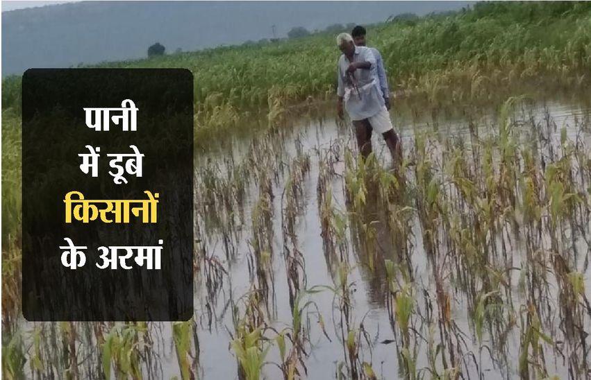 पानी में डूबे किसानों के अरमान, 80 फीसदी सोयाबीन की फसल खराब