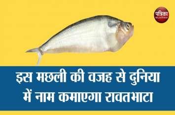 इस  ' मछली ' की वजह से अरब देशों में नाम कमाएगा रावतभाटा...