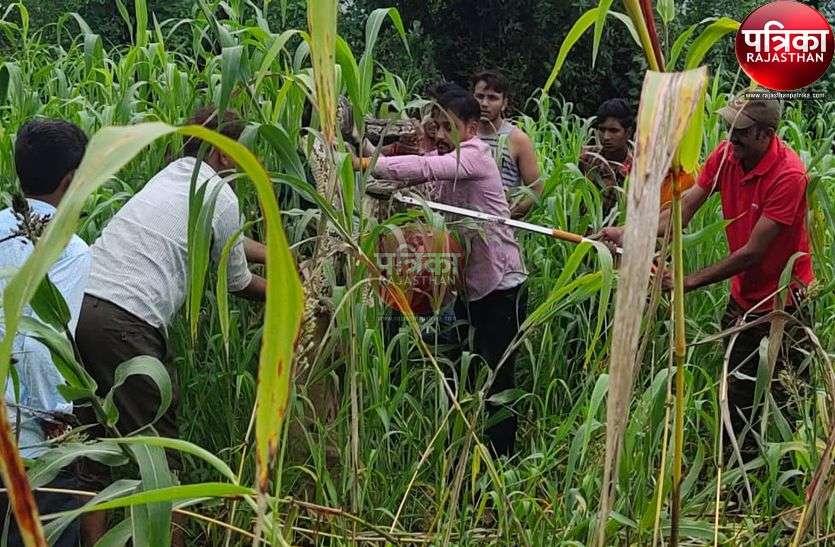 खेत में आया रॉक पाइथन, ग्रामीणों की फूली सांसें, वनकर्मियों ने जंगल में छोड़ा, देखें पूरा वीडियो...