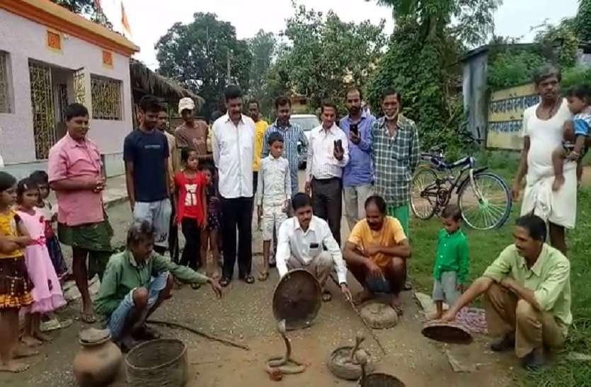 mansa devi temple: इस गांव में सांपों को मारना वर्जित है