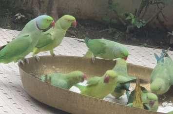 इंसानों की बस्ती में पक्षियों का बसेरा,हर दिन जमती है सैकड़ों तोता-मैना की महफिलें
