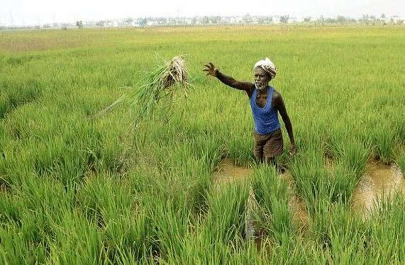 Heavy rain in ajmer: भरपूर बरसात, खेतो-फसलों को मिली संजीवनी