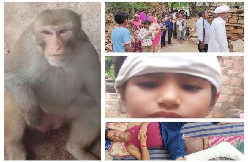 केरू गांव में बंदर ने जमकर मचाया उत्पात, काबू में नहीं आने पर बैरंग लौटी वन विभाग की टीम