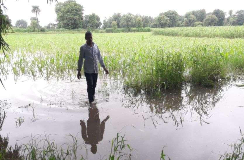 कहां खेतों में भर गया पानी, फसलें हो गई बर्बाद