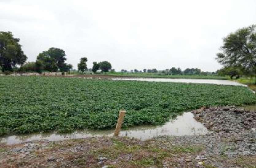 बारिश के बाद अब जलभराव बनेगा किसानों के लिए सिरदर्द