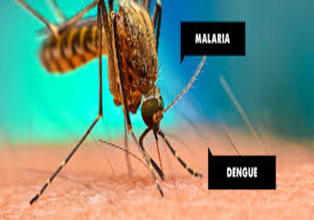 World mosquito day: मच्छर एक, रोग अनेक, इनसे बचने को बरतें ये सावधानियां