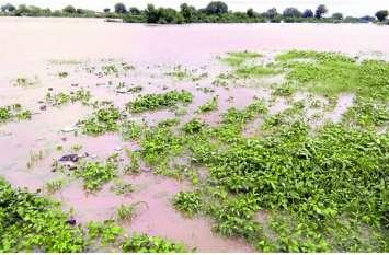 बड़ी खबर: भारी बारिश से कोटा संभाग में 1000 करोड़ की फसलें तबाह, किसानों की आंखों से बहे आंसू