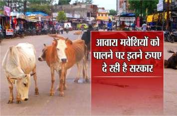 Avara cattle : अब आवारा मवेशियों को पालने पर सरकार प्रतिदिन दे रहीं है इतने रुपए