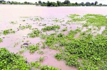 किसानों के लिए जरूरी खबर: जलमग्न खेतों तक नहीं पहुंच सकी सर्वे टीम, क्लेम के लिए जल्द करें आवेदन