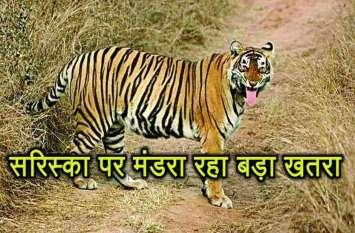 राजस्थान के सरिस्का में बाघों पर मंडरा रहे खतरे के बादल, सरिस्का क्षेत्र में हो रहे धमाकों से हालात चिंताजनक