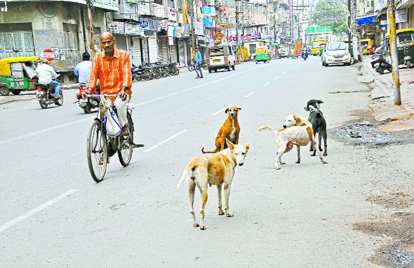शहर में हर 15 मिनट में एक व्यक्ति हो रहा कुत्ते का शिकार