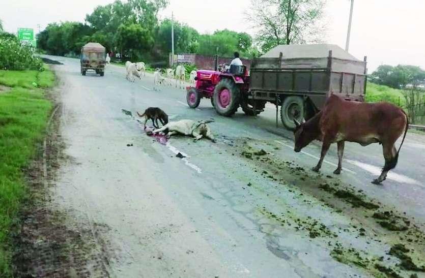 खाकी की चुप्पी, सड़कों पर दौड़ती मौत