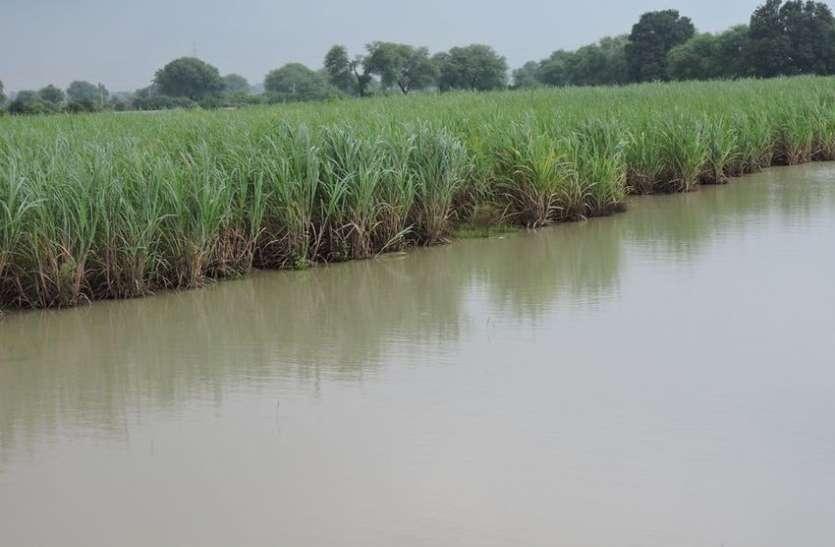 Rain : बारिश से लबालब हो गए जलाशय और तालाब