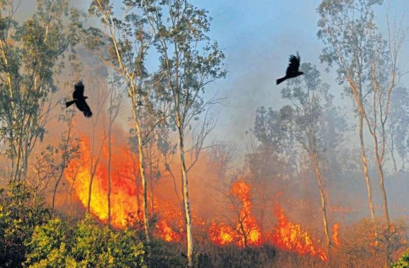 ब्राजील के जंगलों में आग लगने की घटनाओं ने बढ़ाई चिंता, प्रदूषण खतरनाक स्तर पर पहुंचा