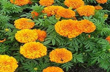 सिर्फ खूबसूरत या खुशबूदार नहीं है ये, इन फूलों के चमत्कारी गुण जान रह जाएंगे हैरान
