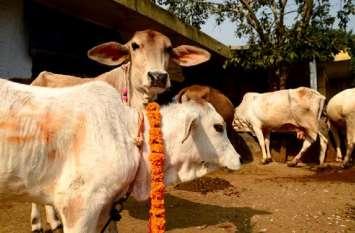 जिसकी गाय और भैंस देगी अधिक दुग्ध, उसे मिलेगा 50 हजार का पुरस्कार