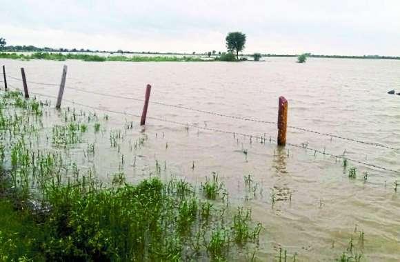 किसानों के अरमानों पर फिर पानी