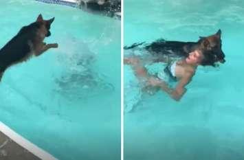 डूबती लड़की की कुत्ते ने कूदकर बचाई जान, सही सलामत पूल से निकाला बाहर