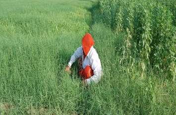 बुवाई की तैयारी और खरपतवार हटाने में जुटे किसान
