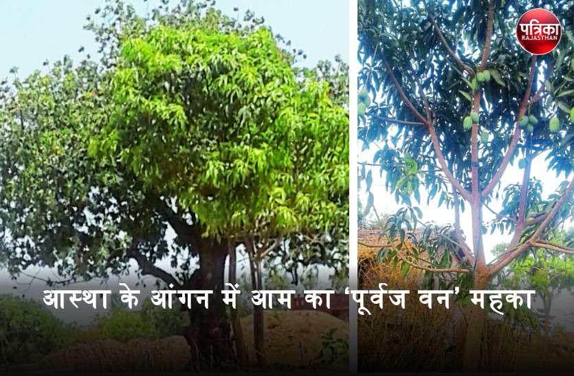 आदिवासी परिवारों ने 'सिरा बावसी' की स्थापना के साथ किए पौधरोपण, बदली गांव की तस्वीर और बन गया 'पूर्वज वन'