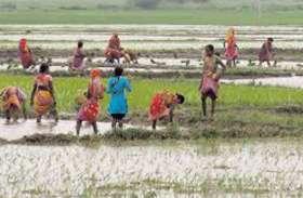 3 महिला और 2 किशोरी खेत में लगा रही थीं धान का रोपा, अचानक तेज गर्जना के साथ वहां गिरी आकाशीय बिजली, फिर...