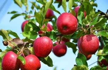 कश्मीर में लॉकडाउन से भारी नुकसान, सेब उत्पादक से लेकर बैट निर्माताओं को भी परेशानी