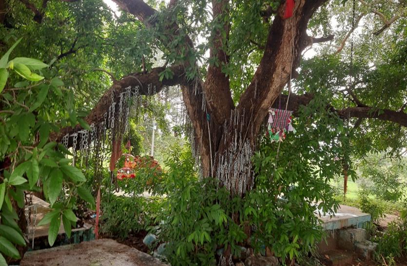 आस्था: शारीरिक कष्ट दूर करने या मनोकामना की पूर्ति के लिए पेड़ पर ठोकते हैं सांक ल