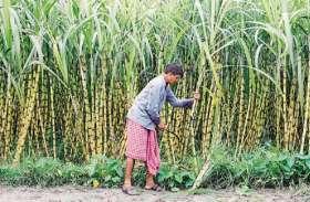 उद्यान विभाग की योजनाएं किसानों तक पहुचाने की इस तरह बनी योजना