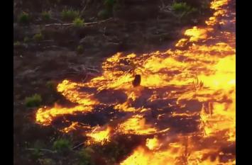 VIDEO में देखिए किस तरह आग उगल रहे हैं अमेजन के जंगल
