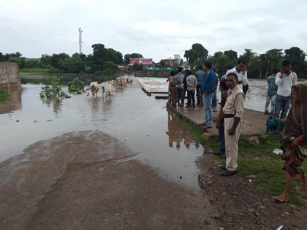 सुरक्षा कर्मी देखता रहा और नदी के पुल पार कर रहे गाय बछड़े एक एक कर बह गए
