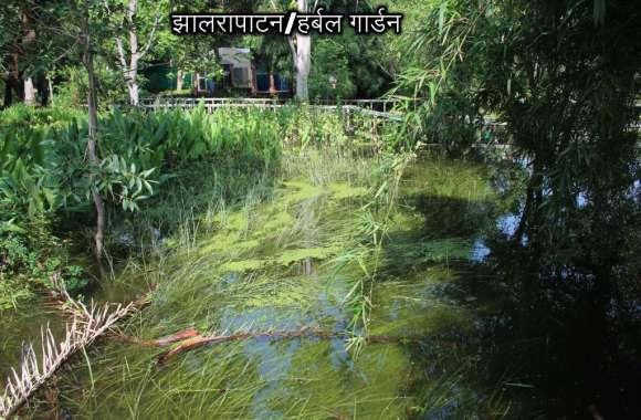 9 दिन से पानी में डूबी वनस्पति की  आपदा प्रबंधन नहीं ले रहा सुध