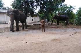 जंगली हाथी को शांत करने का अभियान टला