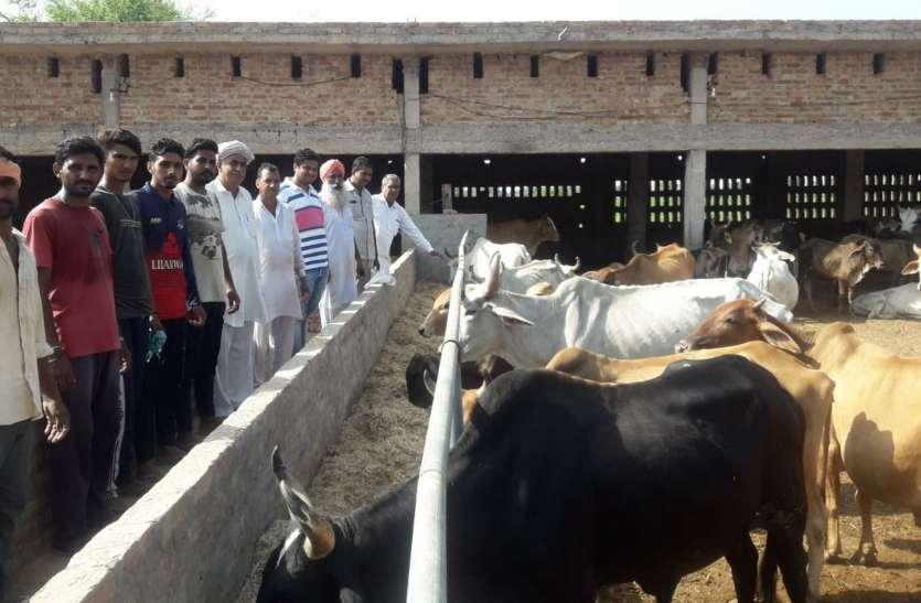 ग्रामीणों ने जनसहयोग से बनाई श्रीकृष्ण गोशाला