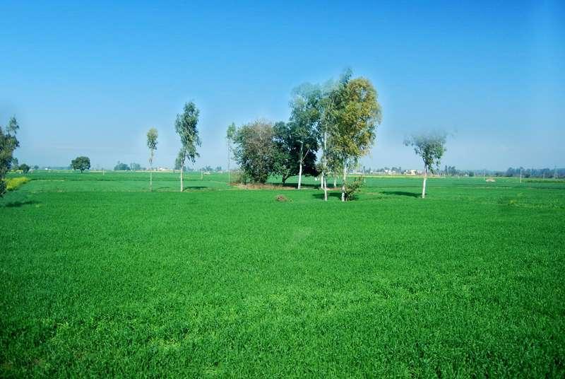 indian_green.jpg