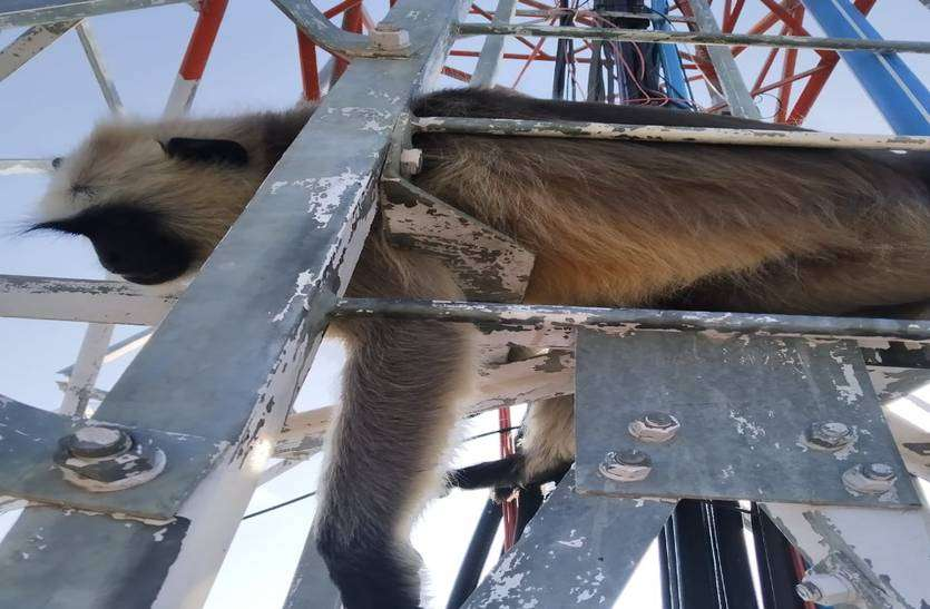 दो दिन तक मोबाइल टावर पर तड़पते बंदर ने जान गंवाई