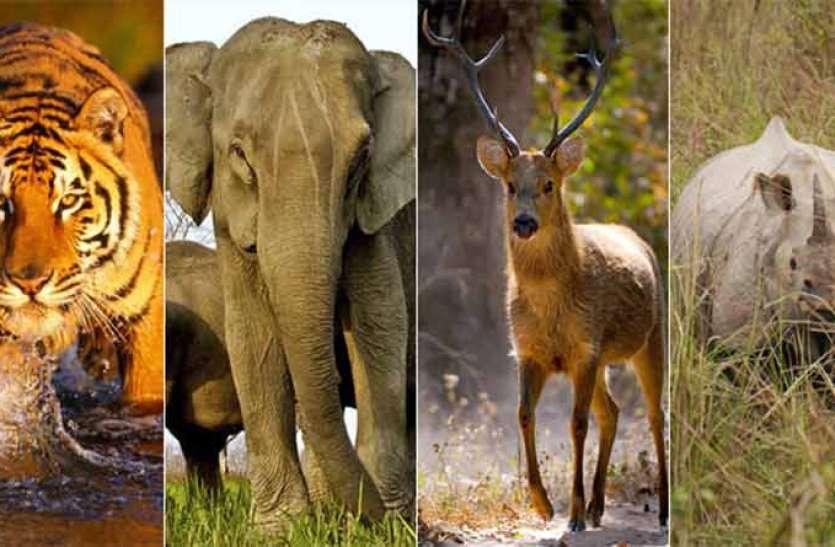 विलुप्त वन्य जीवों और पौधों का संरक्षण के लिए 11 पार्क बनाकर भूली सरकार