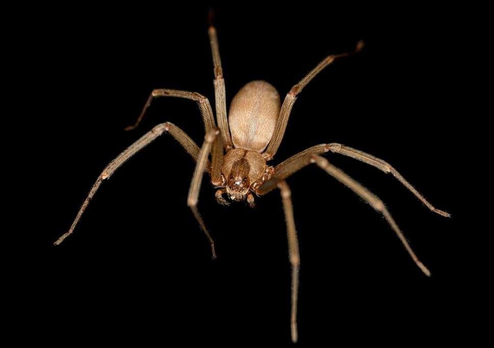 spiderr.jpg