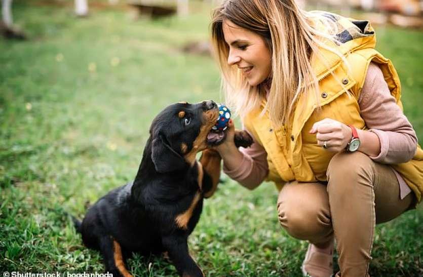 World Dog Day: अध्ययन में खुलासा, अपने मालिक को स्वस्थ रखते हैं पालतू डॉग्स