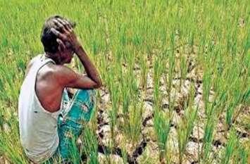 बीमा कंपनी का किसानों के साथ छल