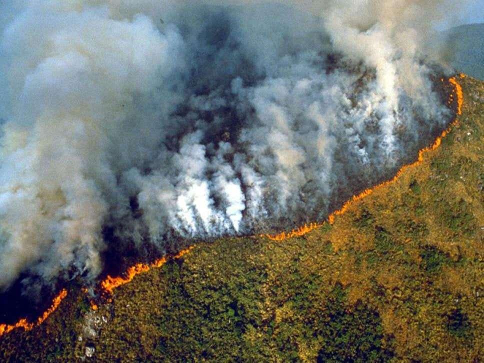 Fire in Amazon Forest : धरती के फेफड़ों में आग